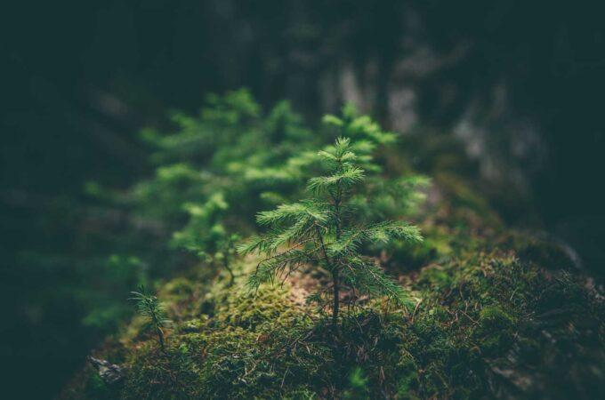 グリーン成長戦略イメージ